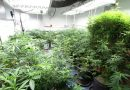 Marijuana Farming Effects on Environment